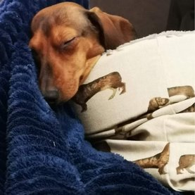 Puppy manden & slaapzakken
