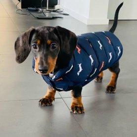 Puppy kleding