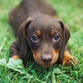 Puppy gezondheid & snacks