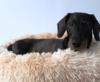 hondenmand fluffy